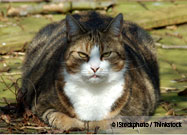Owner of Obese Cat Charged with Animal Cruelty