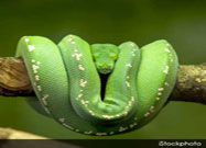 8 Intriguing Facts About Snakes