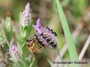Bee-Washing