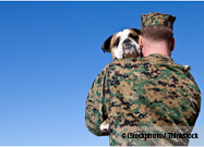 Caring for Pets of Military Families