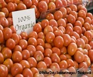 Organic Tomatoes, While Smaller, are More Nutritious than Conventional Counterpart, Study Shows