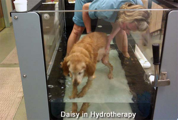 Daisy in hydrotherapy