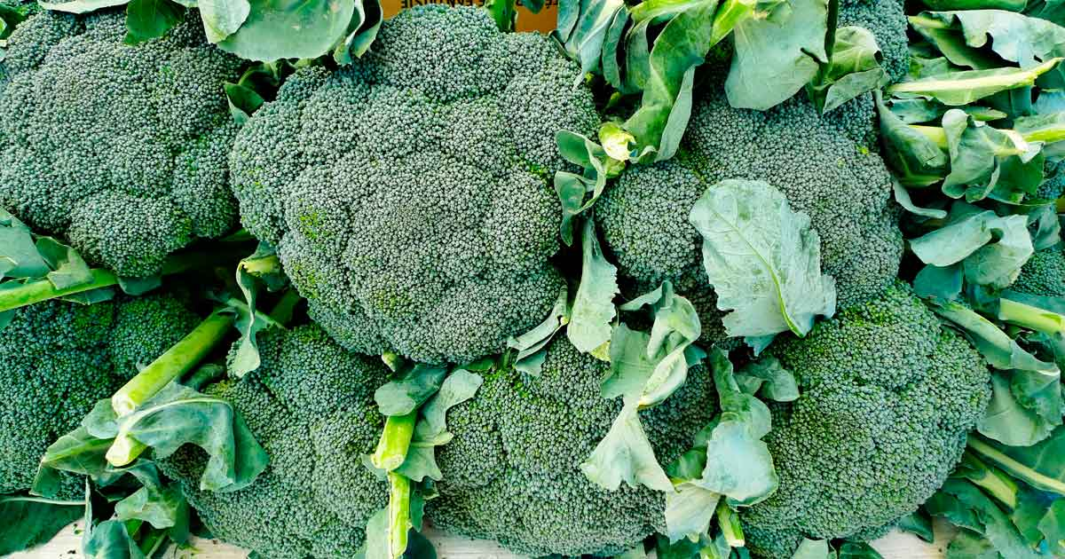 How Eating Broccoli Benefits Your Overall Health