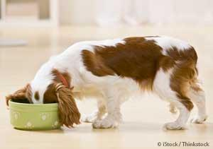 Aflatoxin in Pet Foods