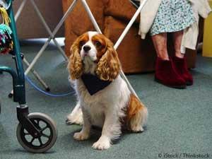 Animal Treatment