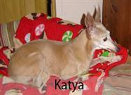 21-Year-Old Katya's Incredible Journey from Puppy Mill to Family Dog