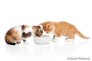 Cat Diet