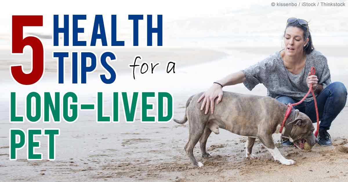 Five health tips for a long lived pet for Cid special bureau 13 april 2014