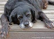 "How to Tell Illness from ""Oldness"" in Your Senior Pet"