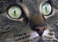 Who Knew? Your Cat Has Super-Vision!