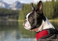 Este Simple Remedio Casero Cura la Mayoría de los Problemas de Piel Caninos - Sin Medicamentos...