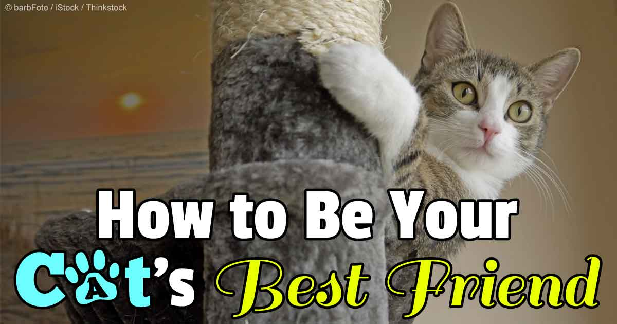 Tips To Help You Become Your Cat's Best Friend