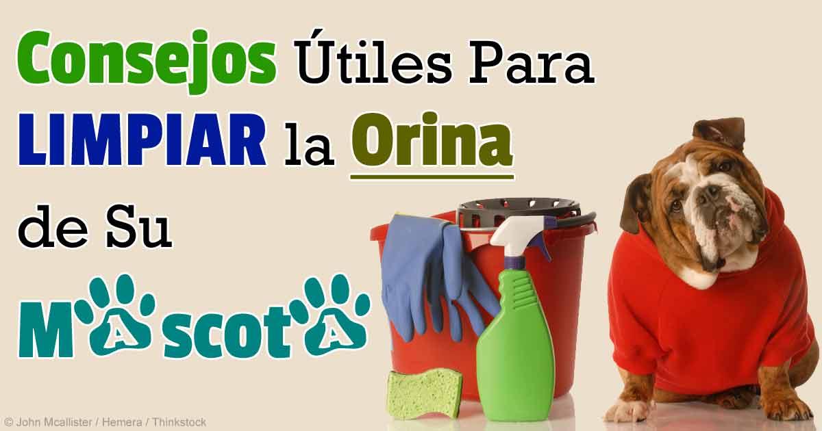 Limpieza y eliminaci n de olor de orina de mascotas - Productos para limpiar alfombras en casa ...