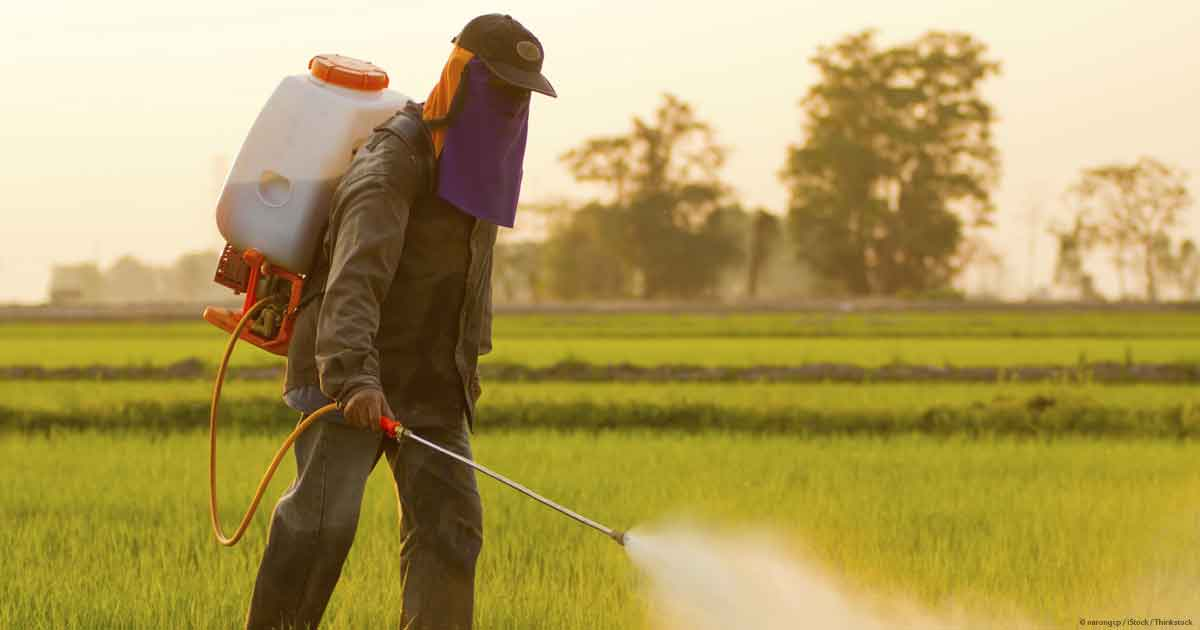 gut wrenching new studies reveal insidious effects glyphosate