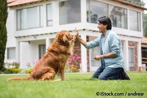 Cuatro Principios Comprobados para Domesticar a un Perro de Cualquier Edad…