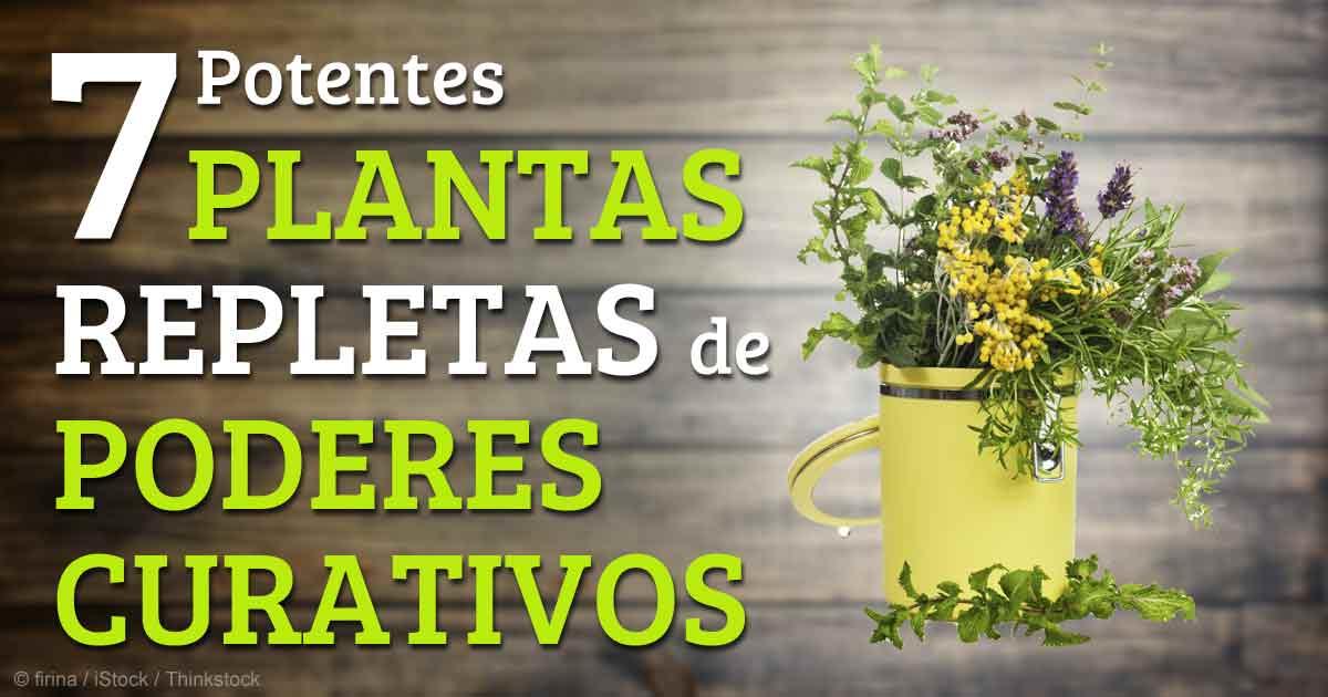 7 Plantas Medicinales Que Pueden Utilizar Para Beneficiar