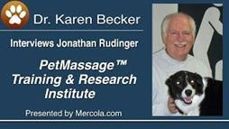 Massage Therapy Helps Remove Disease from Your Pet's Body