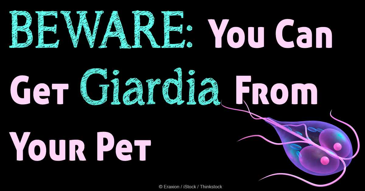 Is Giardia Contagious From Dog To Cat