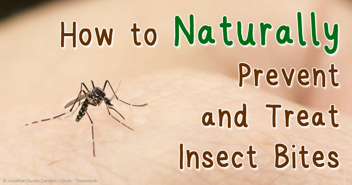 Natural Treatment For Black Fly Bites