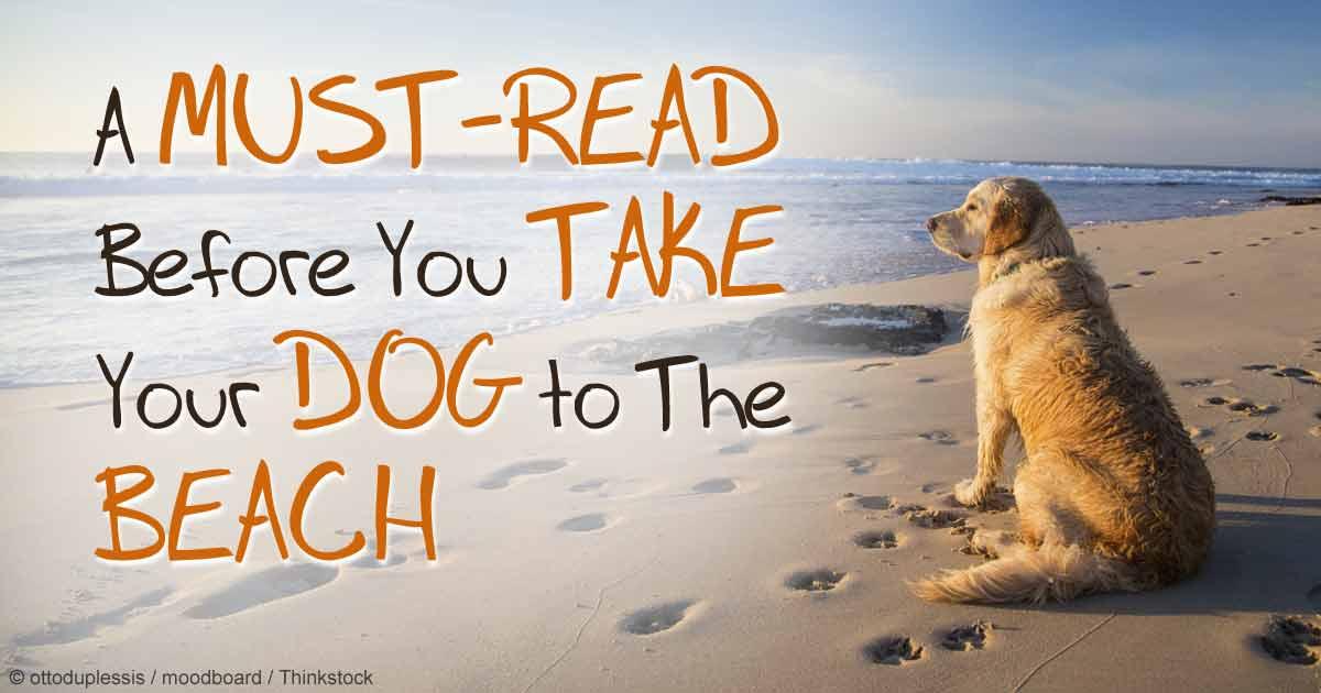 Can Dogs Go On Looe Beach