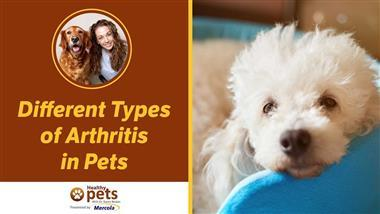 Arthritis: Could Your Pet Be Suffering from This Debilitating Inflammatory Disease?