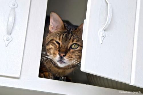 cat neutering vouchers 2015