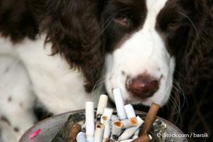 Peligros del Cigarro