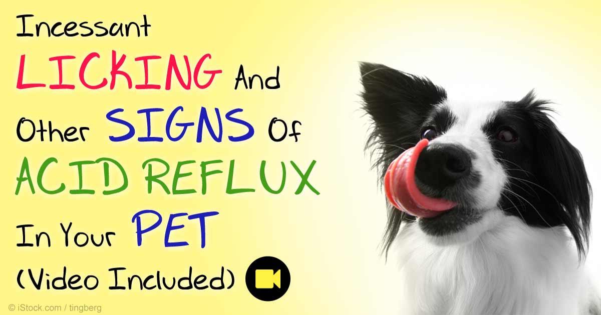 Diagnosing Gastroesophageal Reflux Disease (GERD) in Pets