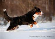 6 Great Breeds for Active Dog Owners