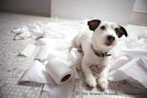 Perro con Diarrea
