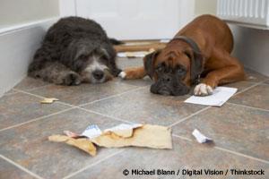 ¿Comete Usted Este Error Cuando Su Mascota Se Porta Mal?
