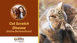 Bartonellosis: The Disease Your Cat Can Pass Onto You
