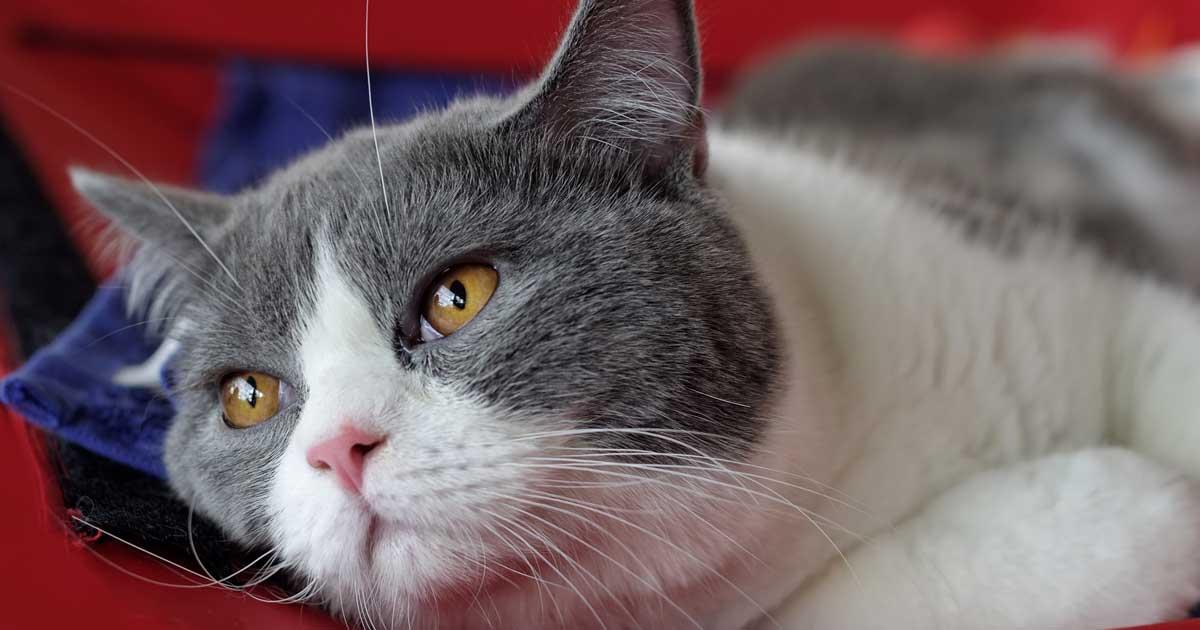 Cat Medical Questions Free