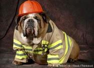 5 Ways Your Pet Could Start Your House on Fire