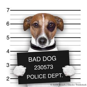 Pet Behavior Problem