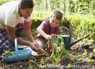 Cómo Cultivar Sus Propios Alimentos en Espacios Pequeños