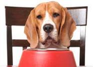 ¿Su Perro Tiene Hipotiroidismo?