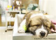The Importance of Sleep for Hospitalized Pets