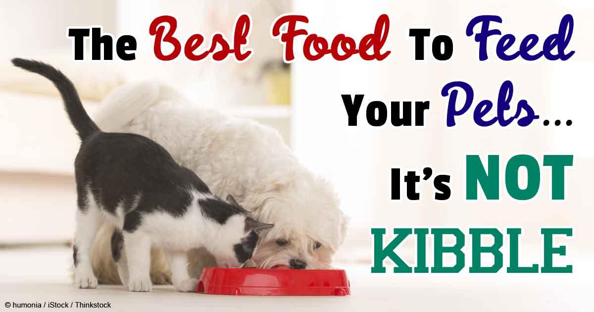 Mercola Healthy Pets Cat Food Minutes