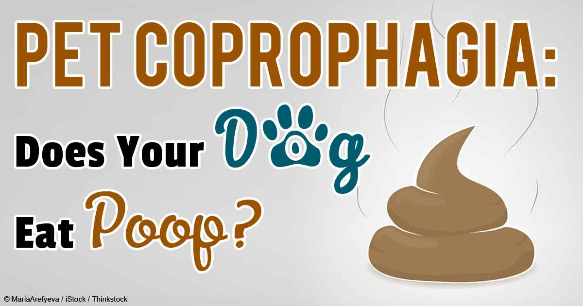 Medical Reasons For Coprophagia Poop Eating