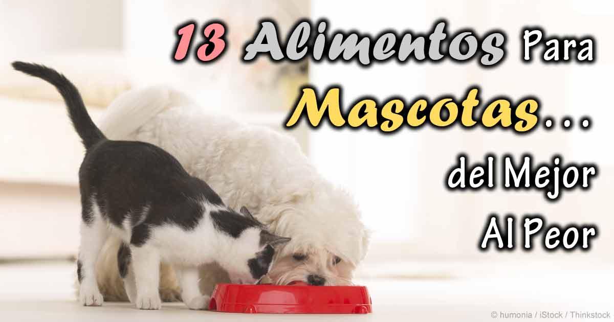 Las mejores marcas de comida de gatos maduros