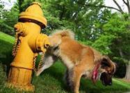 Insuficiencia Renal Canina: Causas Tratamiento y Prevención