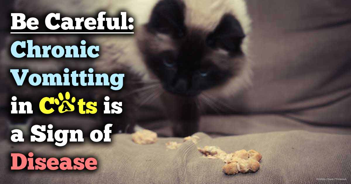 ssscat cat training aid petsmart