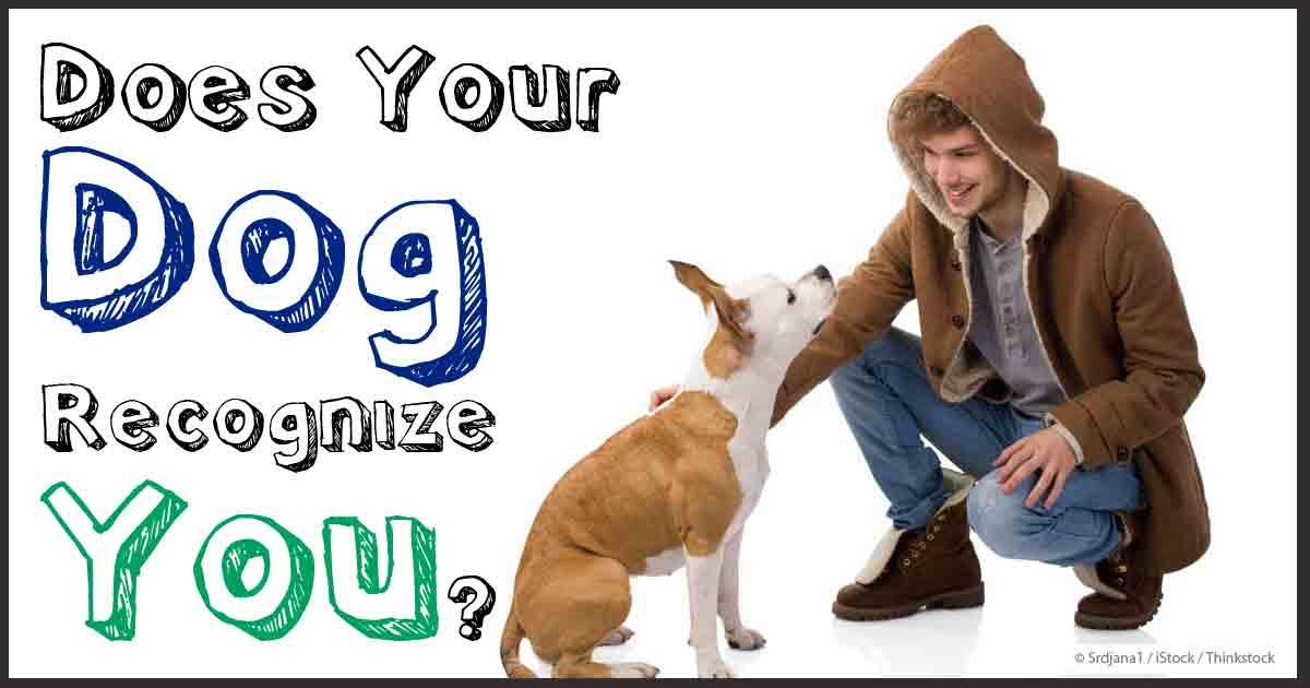 Image Result For Dog Food Vitamin D