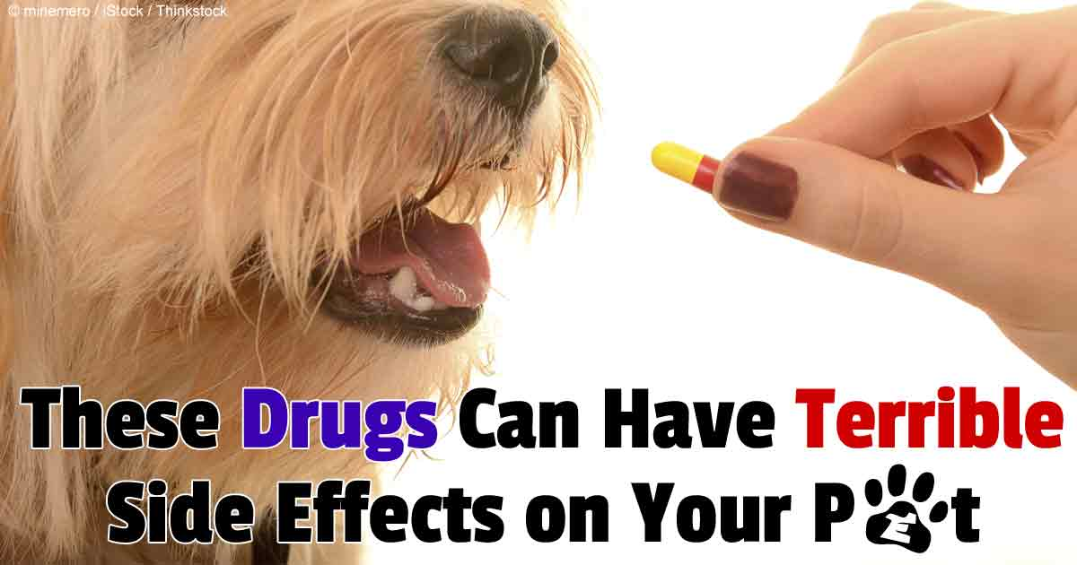 Can Dogs Take Prednisone For Pain Relief
