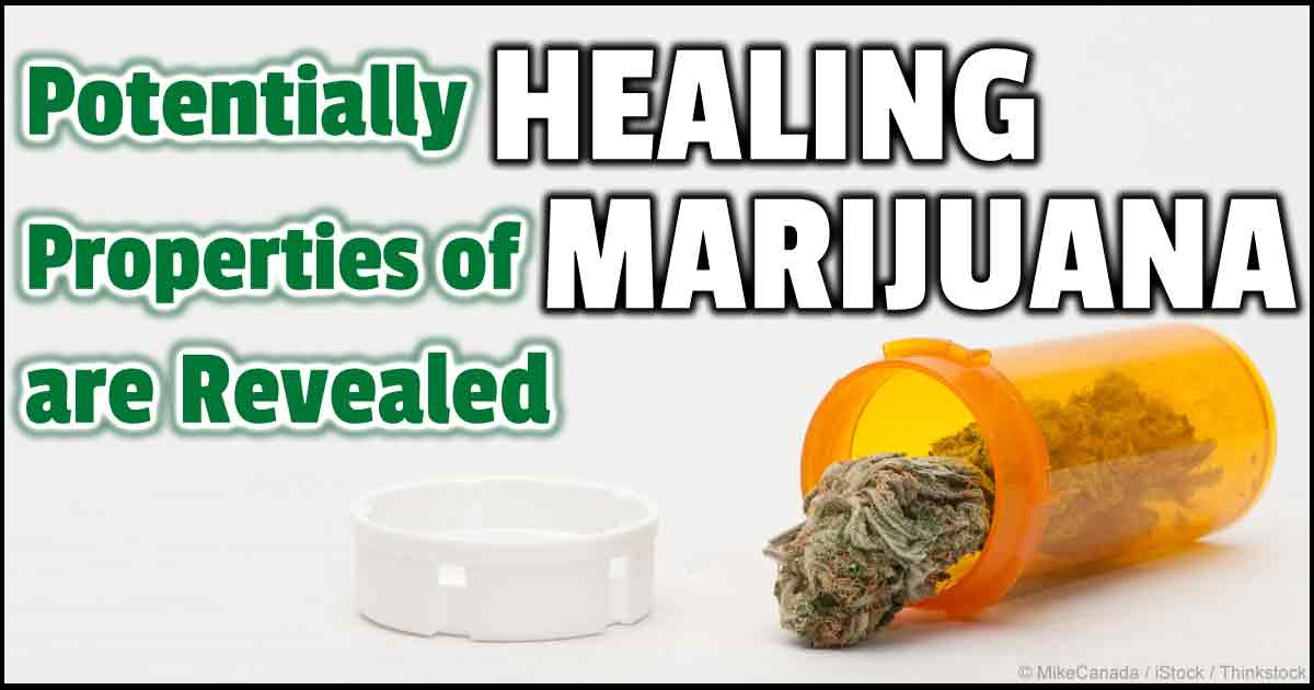 the medicinal properties of marijuana What is medical marijuana medical marijuana is any part of the marijuana plant that you use to treat health problems people use it to get relief from their symptoms, not to try to get high.