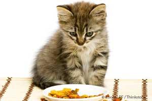 Vomito en Gatos