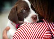 Majority of Pets Also Suffer Abuse in Domestic Violence Situations