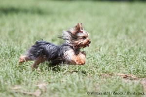 Rodilla Dislocada en Perros