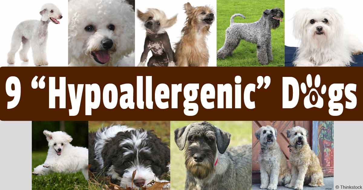 How To Replace Hypoallergenic Dog Food